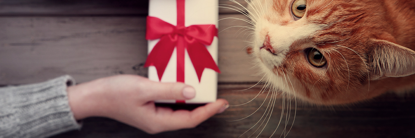 Cat being given gift box