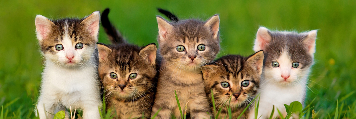 adorable kittens in the grass